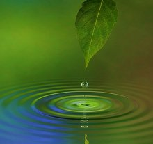 Contact Me and FAQs. Library Image: Leaf and Water
